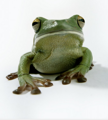 frog.1