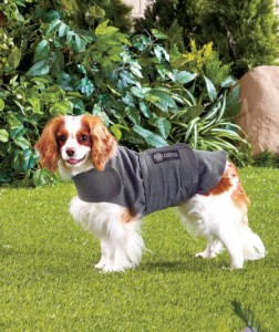 AKC Calmcoat is the easy-to-wear anti-anxiety and calming coat for your dog.