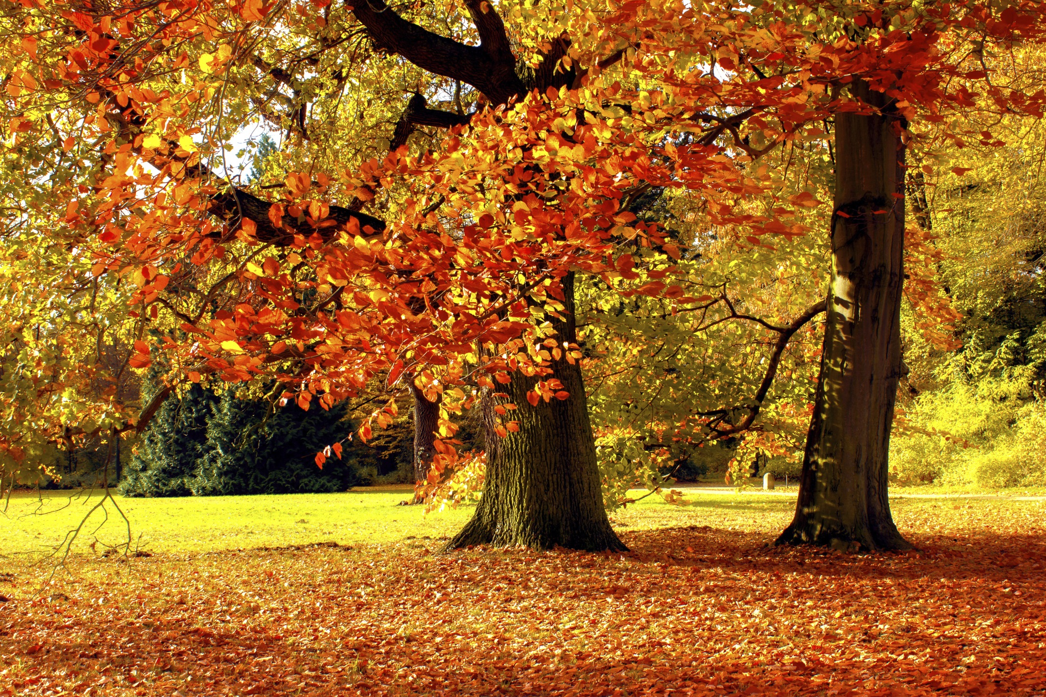 Image result for fall leaves with pumpkins
