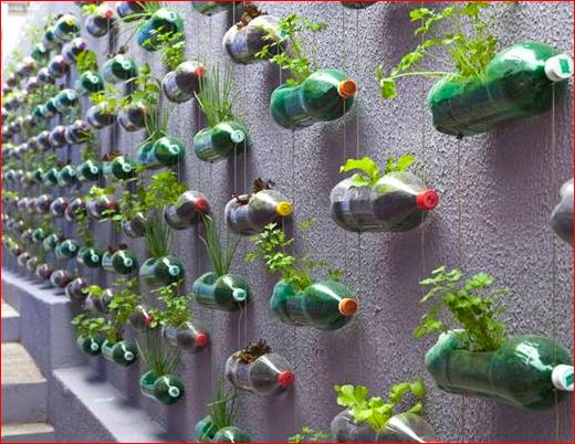soda-bottle-garden