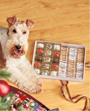 75-piece-gourmet-dog-treat-gift-box