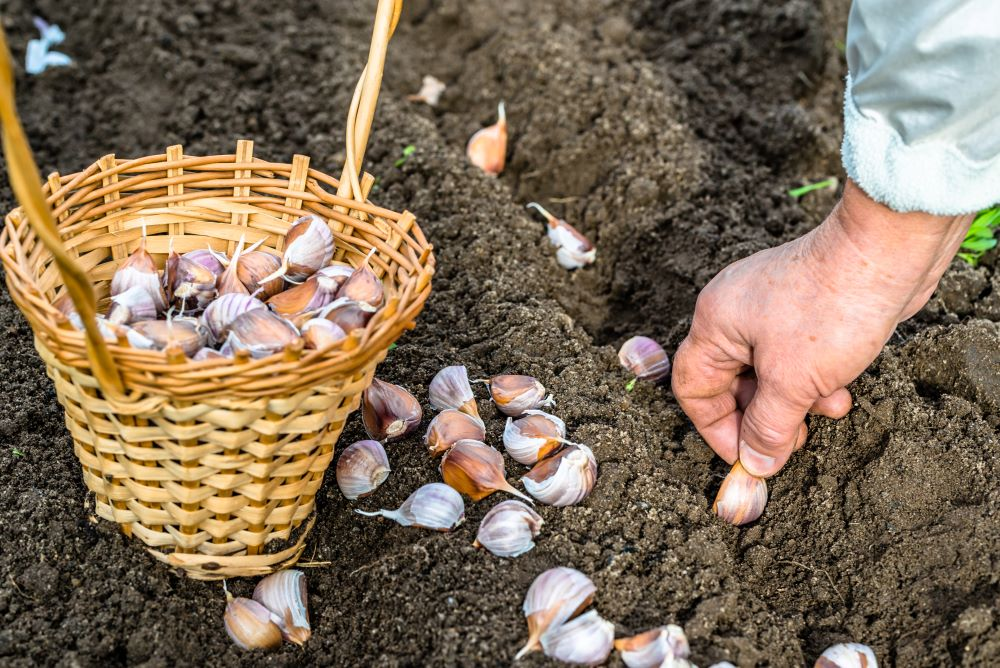 How To Keep Pests Of Out The Garden - Aromatic Plants