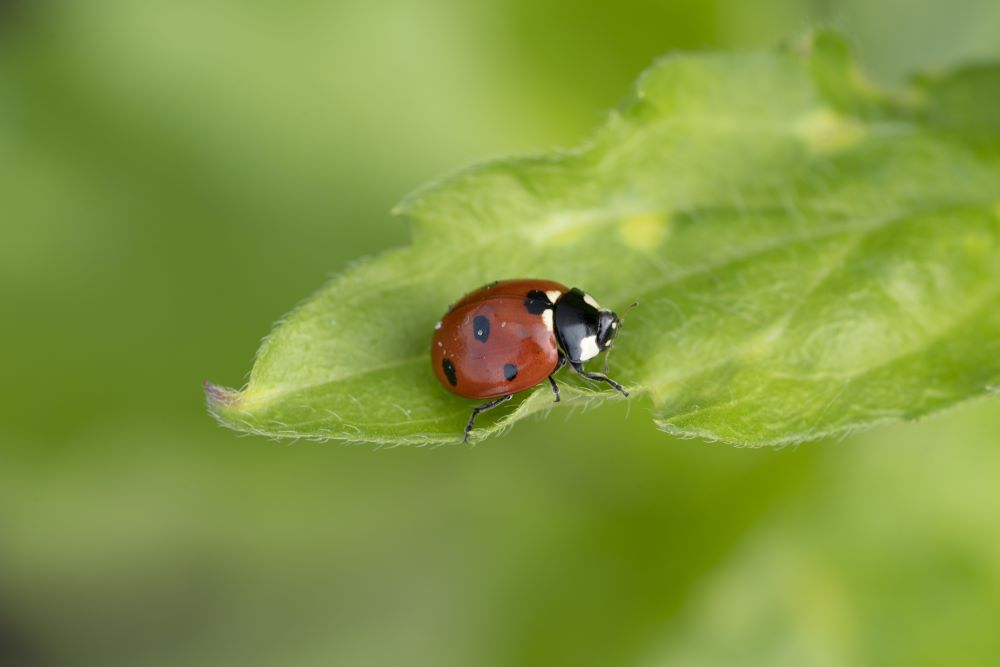 How To Keep Pests Of Out The Garden - Beneficial Bugs