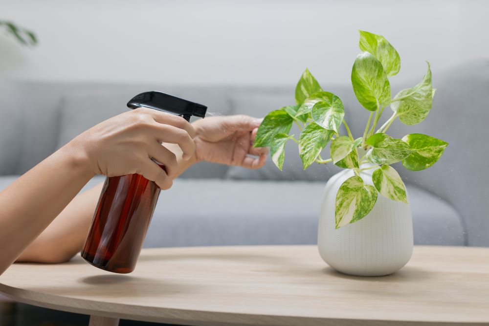 How To Grow Healthy Houseplant - Pest Control: Houseplants