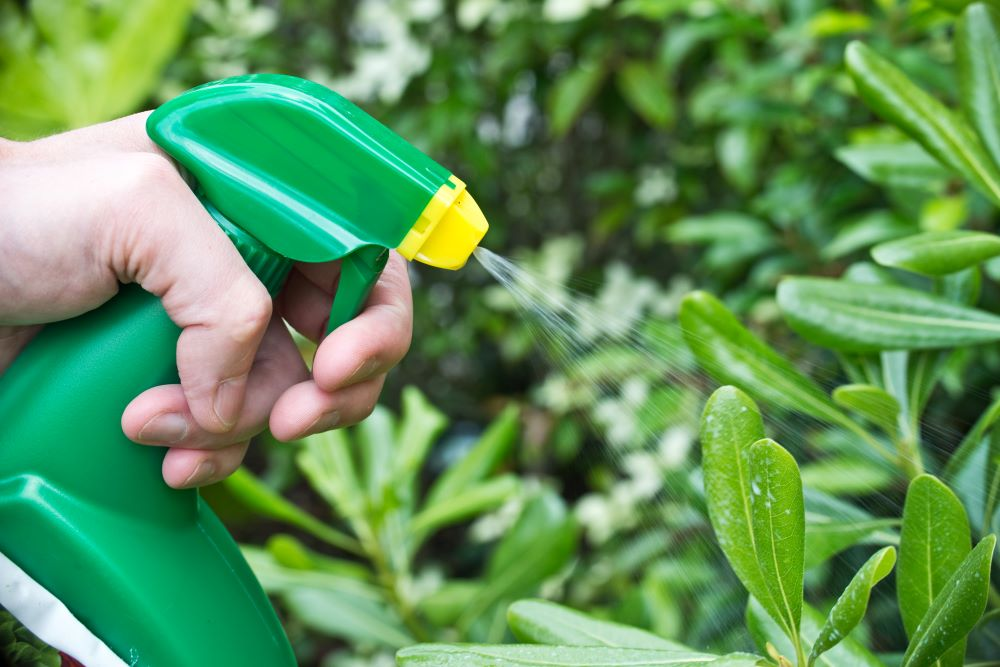 How To Keep Pests Of Out The Garden - Natural Insecticides