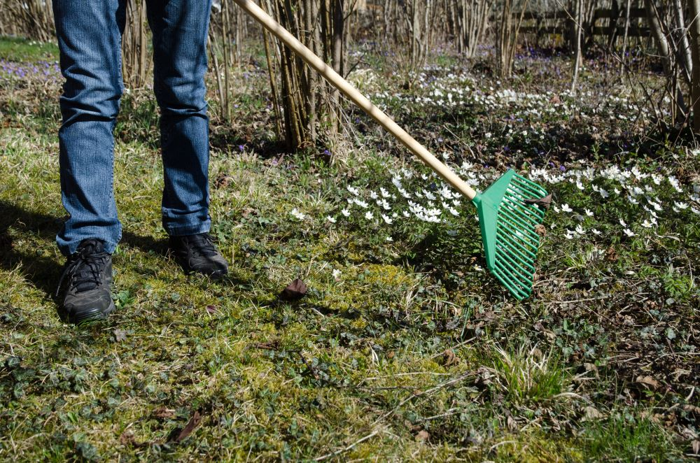 How To Get Your Garden Ready For Spring - Clean Your Garden