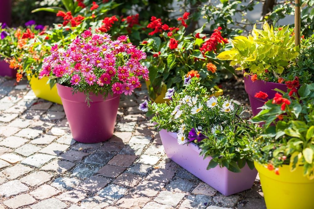 Container Gardening Tips - Flowers for Containers