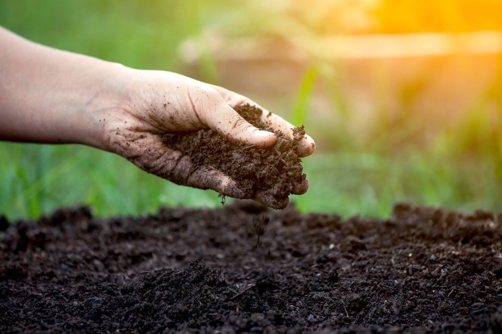 Beginner Gardening Tips - Choose Soil Carefully