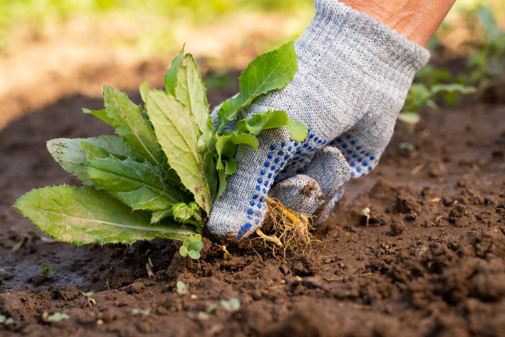 vegetable garden maintenance