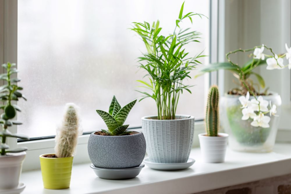 How To Care For Indoor Succulents - Choose Planters With Drainage