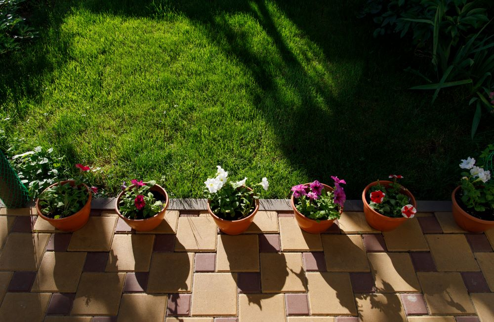 Flower pots with sunlight