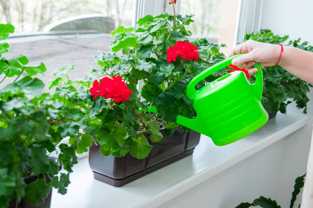 Water your garden containers regularly